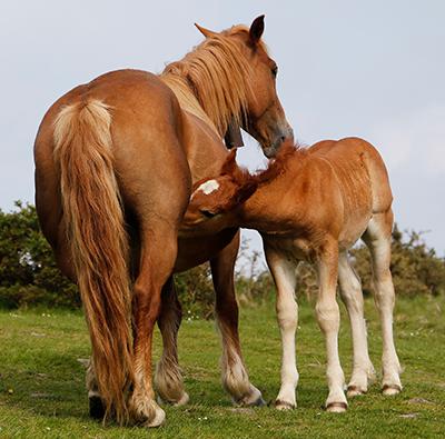 allattamento mammiferi